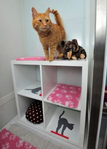Cat on a shelf