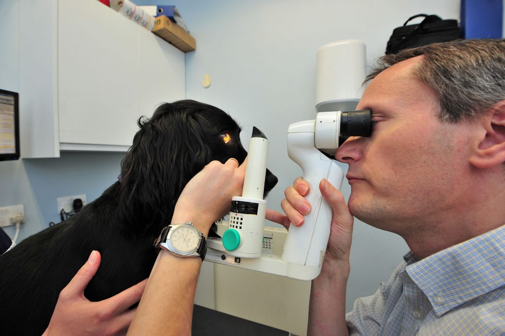 Vet eye examination